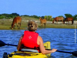 Woman kayaking and looking at horses on Amelia Island